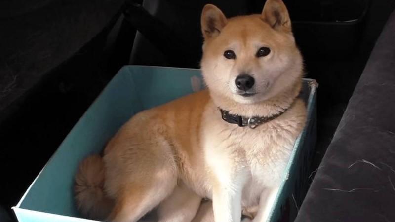 Ο ιδιοκτήτης του σκύλου όλο και μικραίνει το κουτί που κάθεται στο αυτοκίνητο. Θα τα χάσετε στο τελευταίο!