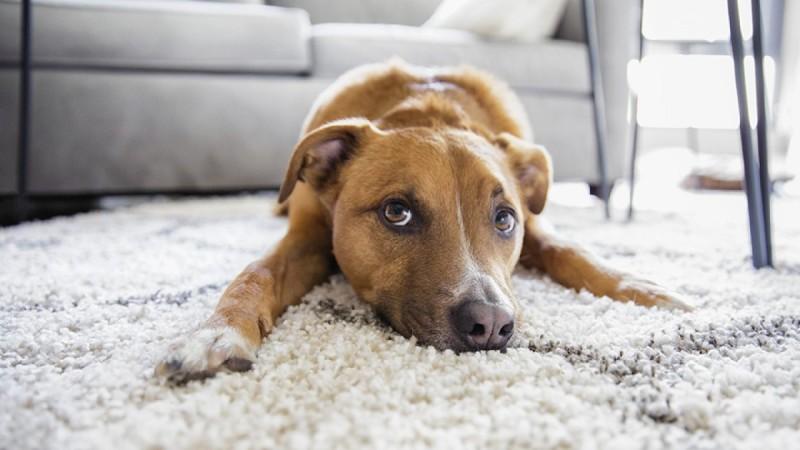 4+1 σοβαρές ασθένειες που μπορούν να εντοπίσουν οι σκύλοι