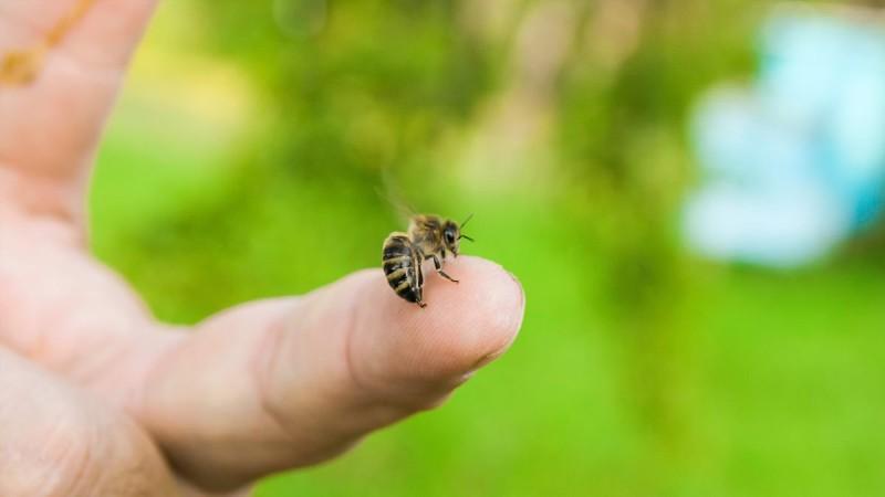 Τρίκαλα: Νεκρός άνδρας από τσίμπημα σφήκας