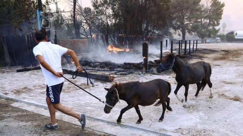 Φωτιά στη Βαρυμπόμπη: Δεν κάηκαν τα άλογα