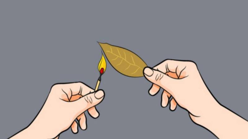 Έκαψε ένα φύλλο δάφνης μέσα στο σπίτι. Περίεργο; Και όμως, Υπάρχουν 3 μοναδικά οφέλη για την υγεία!