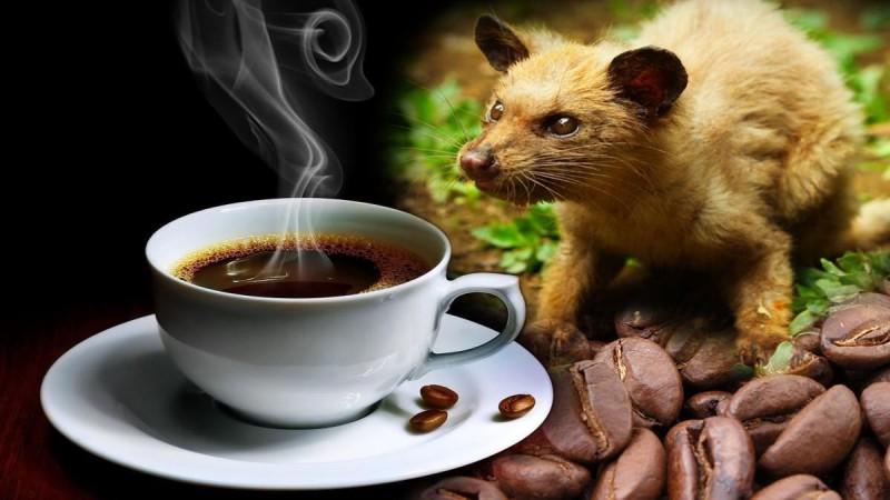 Ανάρπαστος ο καφές στη Μύκονο: Κοστίζει 150€ και είναι από περιττώματα γάτας!