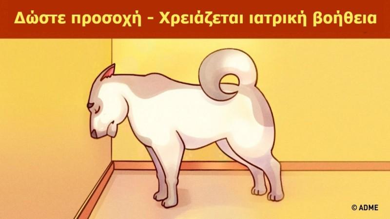 Προσοχή! Αν δείτε το κατοικίδιό σας να κάνει αυτή την κίνηση, πρέπει να επισκεφτείτε αμέσως έναν κτηνίατρο…