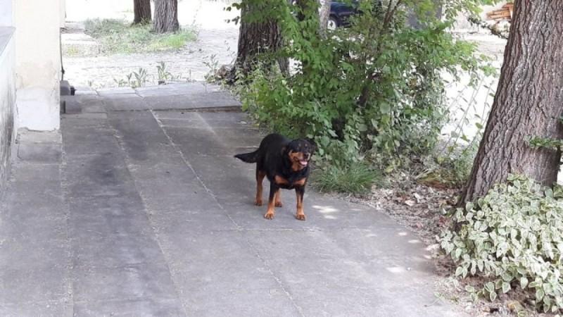 Κιλκίς: Άνδρας πυροβόλησε και σκότωσε σκύλο σε πλατεία χωριού