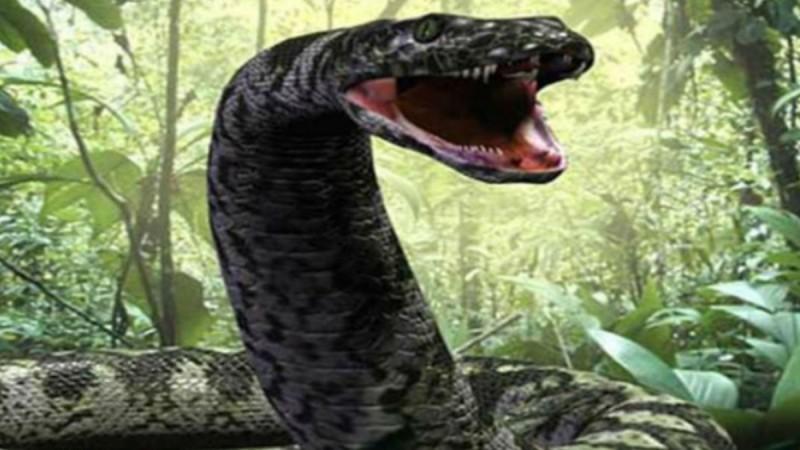 Ζυγίζει 135 κιλά, έχει μήκος 7,5 μέτρα: Το μεγαλύτερο φίδι στον κόσμο που ζει σε αιχμαλωσια!