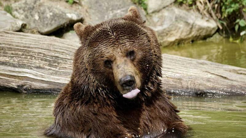 Η λίστα της αρκούδας: Το ανέκδοτο της ημέρας (17/9)