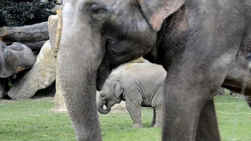 """Έκαναν τσακωτό ελεφαντάκι να τρώει ζαχαροκάλαμο κι εκείνο… """"κρύφτηκε"""" πίσω από κολόνα"""
