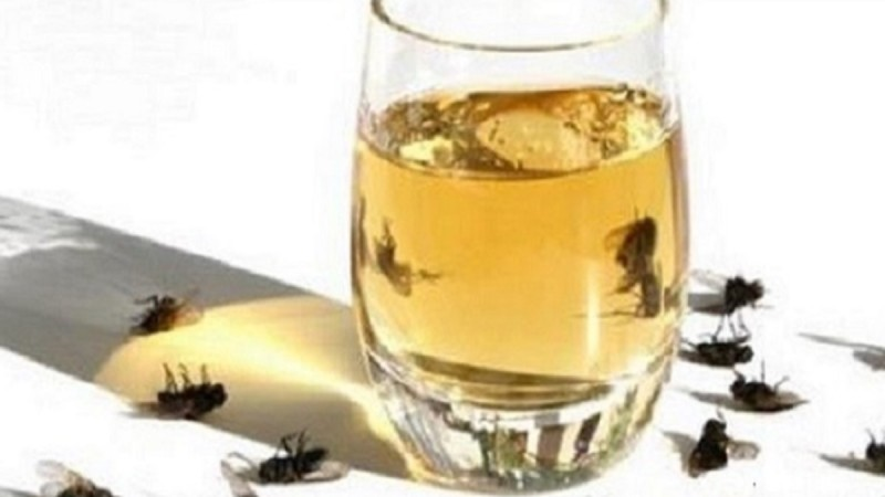 Εξαφανίστε τις μύγες από το σπίτι σας, με αυτή τη σπιτική συνταγή