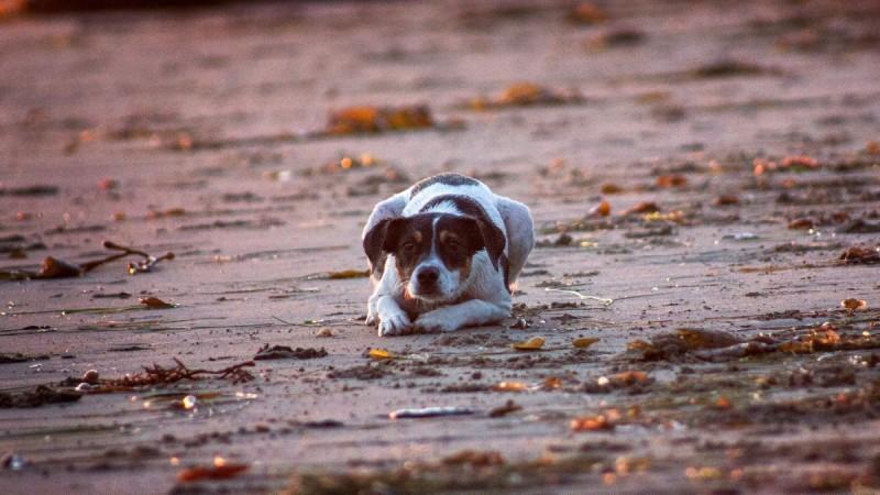 Φρίκη στη Μυτιλήνη: Χτύπησε το σκύλο του και κακοποίησε ανήλικο παιδί που προσπάθησε να προστατέψει το ζώο
