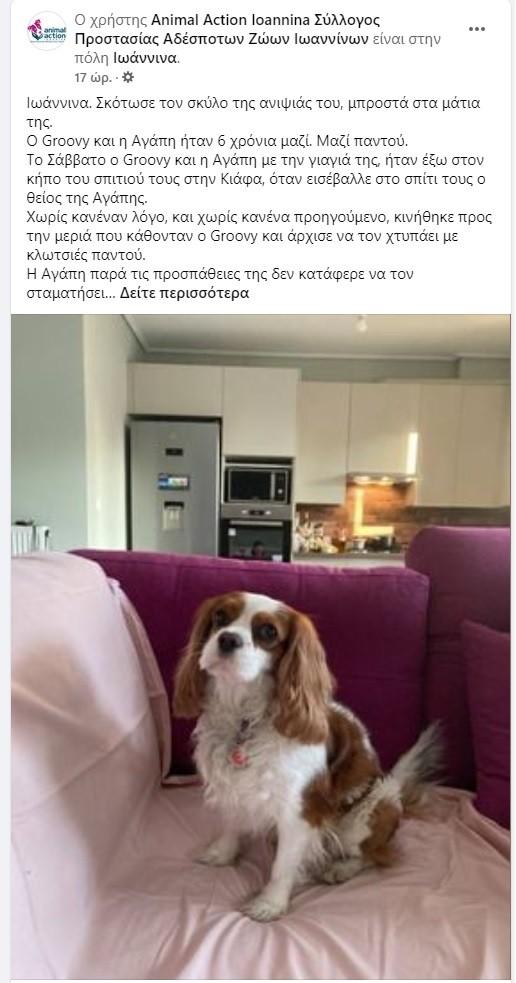 Κτηνωδία στα Γιάννενα: Σκότωσε με κλωτσιές το σκυλάκι της ανιψιάς του