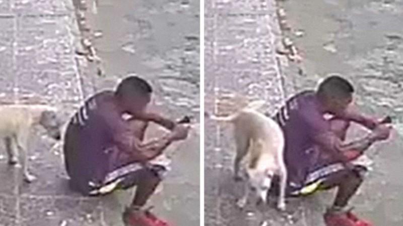 27χρονος υιοθέτησε ένα σκυλί που κατούρησε πάνω του - Την επόμενη μέρα συνέβη κάτι το απίστευτο! (video)
